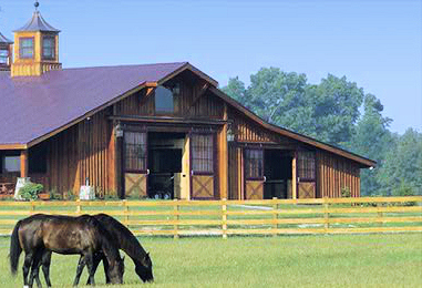 How to choose an equestrian realtor